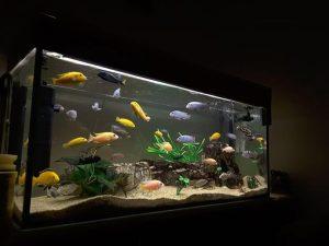 Conocé todo ¿Puedo mover un acuario parcialmente lleno ?