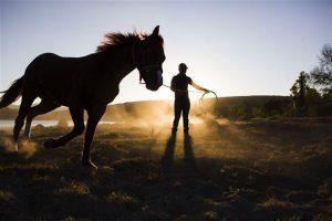 Conocé todo Cómo entrenar a un caballo