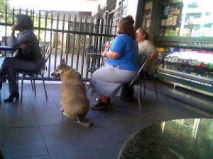 Todo sobre Factores de riesgo de obesidad canina <-