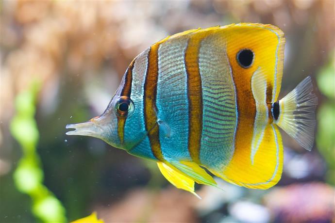 Conocé todo Cómo tratar el pescado para las quemaduras de amoníaco