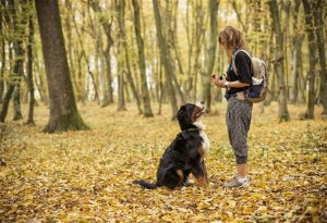 Conocé todo Top Ten suministros esenciales de entrenamiento del perro