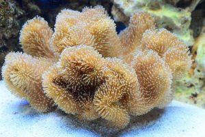 Conocé todo ¿Qué comen los corales ?