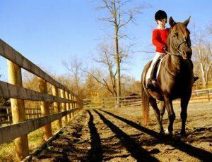 Conocé todo Diez preguntas frecuentes sobre la equitación