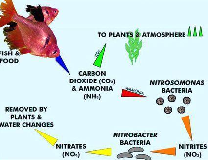 Conocé todo Acelerando el proceso del ciclo del nitrógeno