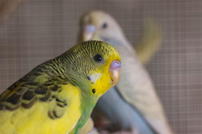 Conocé todo ¿Cómo puede el Cere de un pájaro indicar su sexo y estado de salud ?