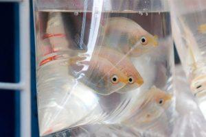 Conocé todo Consejos para mover peces de agua salada