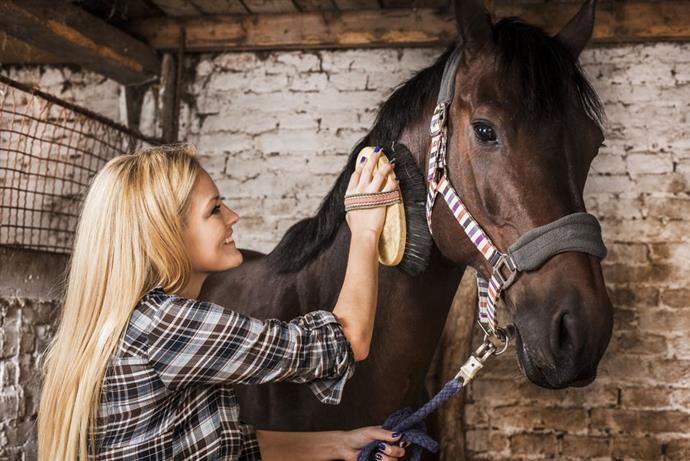 Conocé todo Entrena a tu caballo para moverte desde el suelo