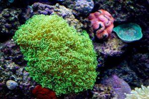 Conocé todo Alimentación de agua salada acuarios corales