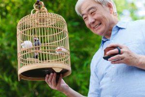Conocé todo Diez cosas que debes saber antes de adoptar un pájaro
