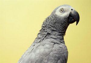 Conocé todo ¿Cómo puedo elegir un pájaro que hable ?