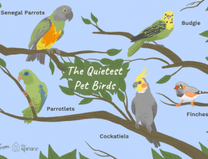 Conocé todo Especie de pájaro de mascota tranquila