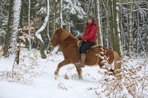 Conocé todo ¿Soy demasiado grande para mi caballo ?
