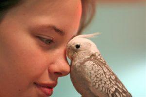 Conocé todo Elija un nombre perfecto para su loro o mascota pájaro