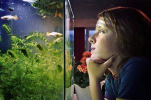 Conocé todo Los mejores materiales de filtro biológico para acuarios
