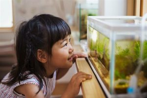 Conocé todo Cómo agregar agua a un acuario