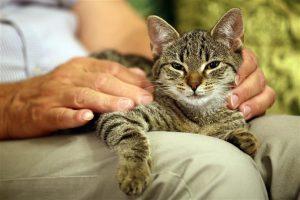 Conocé todo 6 razones por las que deberías adoptar un gato mayor