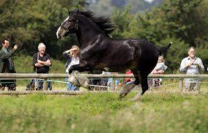 Conocé todo El caballo de la comarca