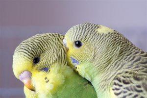 Conocé todo 5 especies de aves amigables que hacen fantásticas mascotas
