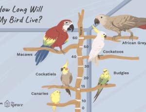 Conocé todo ¿Cuánto tiempo viven los loros y otras aves ?