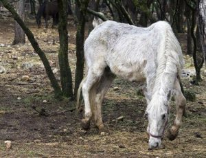 Conocé todo ¿Cuántos años tiene el caballo más viejo ?