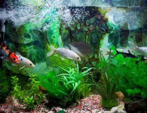 Conocé todo El virus Lymphocystis en peces de acuario de agua salada