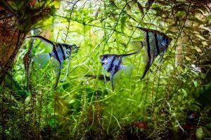 Conocé todo 5 mejores plantas vivas para Angelfish