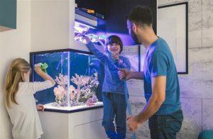 Conocé todo Lo que los aficionados a los peces deberían saber sobre la adición de agua de cal a los tanques de arrecife