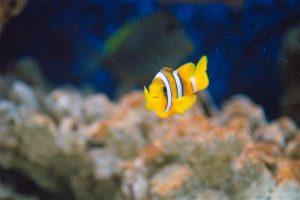 Conocé todo Identificar, localizar y curar el voltaje perdido en un acuario de agua salada
