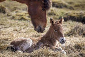 Conocé todo Comparando el caballo con la edad humana