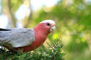 Conocé todo Especies de aves menos conocidas que son excelentes mascotas