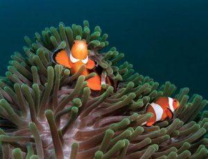 Conocé todo Enfermedades marinas de Ich y otros parásitos de peces