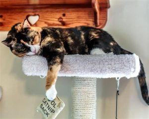 Conocé todo Maneras de dar a su gato Catnip