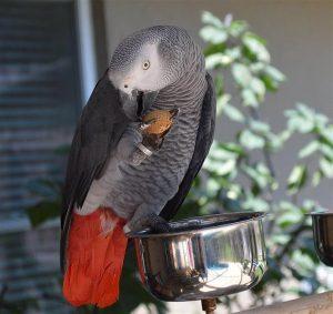 Conocé todo Top 5 especies de aves más inteligentes