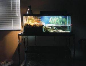 Conocé todo Antes de comprar Reef Tank Lighting
