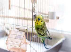 Conocé todo ¿Cuánto tiempo viven los pájaros de mascotas ?
