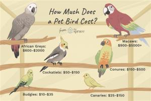 Conocé todo El costo de comprar y cuidar a un pájaro mascota