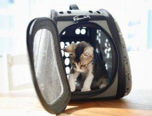 Conocé todo Consejos para el entrenamiento de jaula de gato para viajar