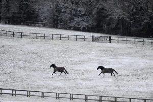 Conocé todo ¿Cuánto debería montar un caballo más viejo ?