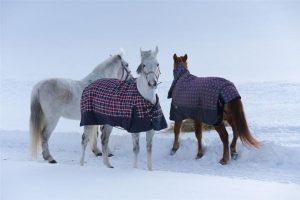 Conocé todo ¿Debes cubrir tu caballo ?