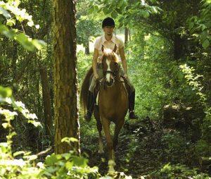 Conocé todo Los fundamentos de la equitación competitiva