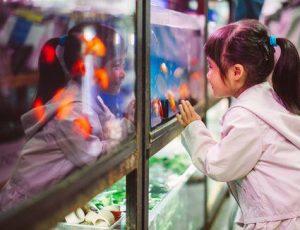 Conocé todo Lo que se necesita para abrir tu propia tienda Live Marine Fish