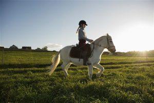 Conocé todo Aprender sobre transiciones de equitación