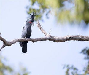 Conocé todo ¿Cuáles son los pájaros de la mascota más infrecuentes ?