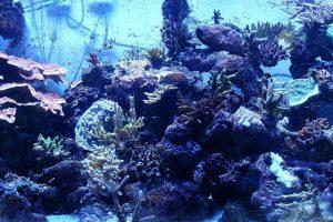 Conocé todo Coral Lighting – Cómo los cambios en los efectos de iluminación de los corales