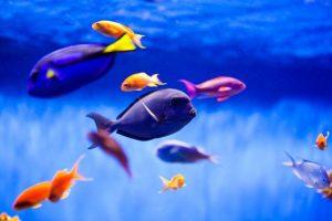 Conocé todo FO o FOWLR a Reef Tank en 7 sencillos pasos