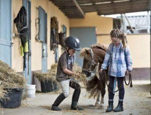 Conocé todo 8 Grandes razas de caballos y pony para niños
