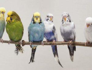 Conocé todo Las especies de aves más populares