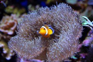 Conocé todo ¿Qué diablos es eso en mi acuario ?