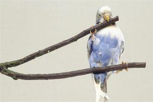 Conocé todo Razones por las que no deberías tener un pájaro mascota