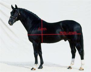 Conocé todo Cómo medir el peso de un caballo